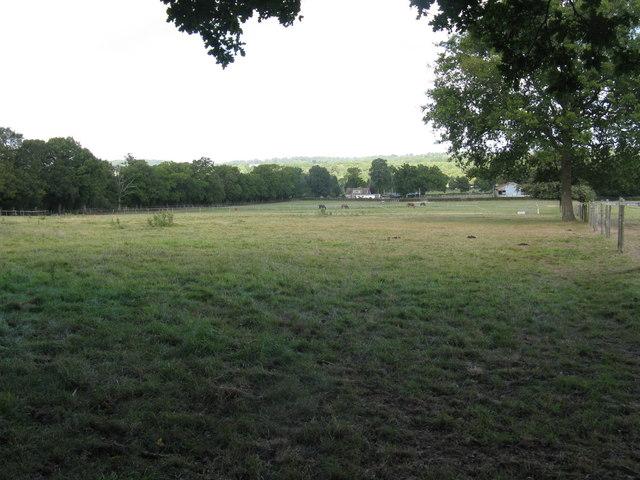 Grazing land south of Naldretts Farm