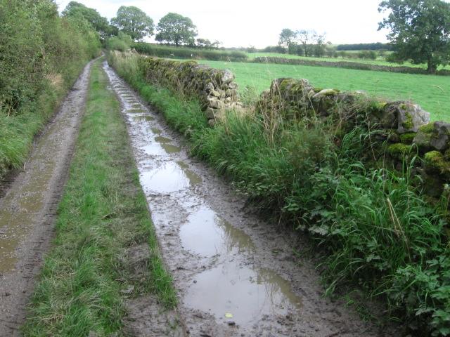 Bark Lane near Eastby