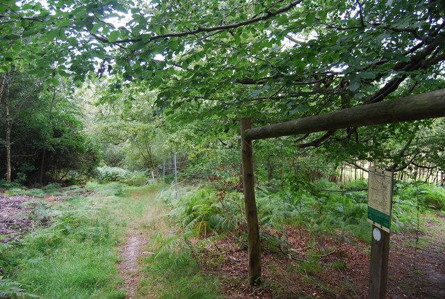 Deer proof fence by the Tunbridge Wells Circular Path, Eridge Park