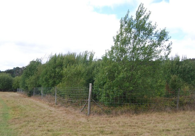 Deer Proof fencing, Eridge Park