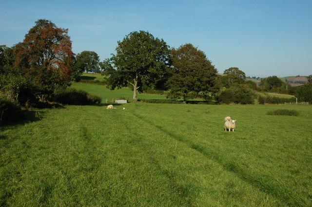Footpath across farmland below Mynydd Garth-pwt