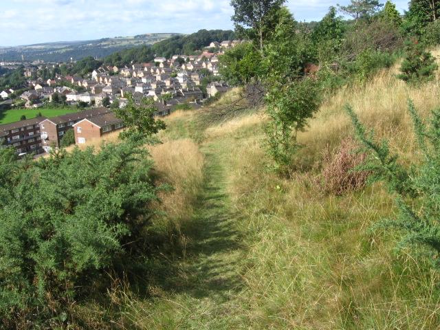 Hillside of Bolton Woods