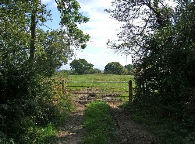 Field, Starts Green Farm