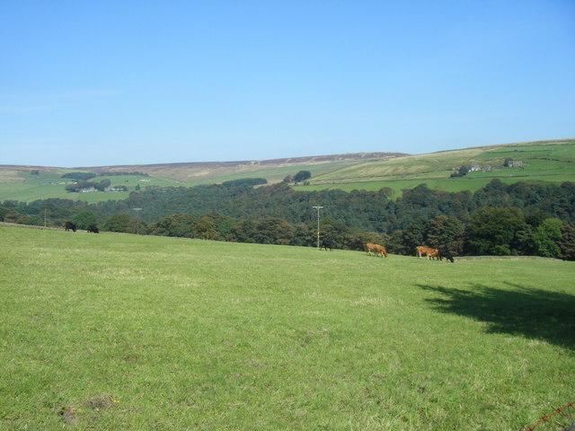 Farmland Overlooking Hebden Dale