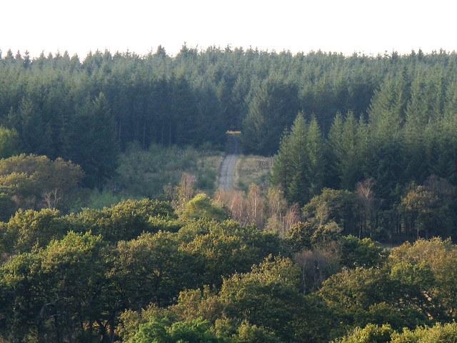 Blaen-egel Wood