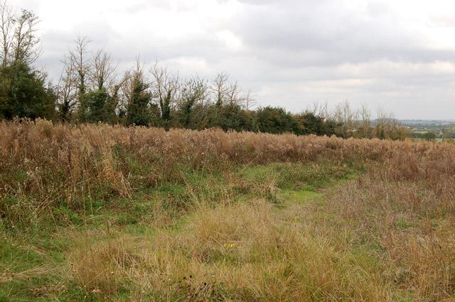 Rough grassland south of Long Itchington