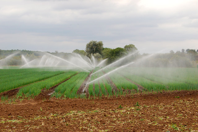 Irrigating onions near Snowford Bridge