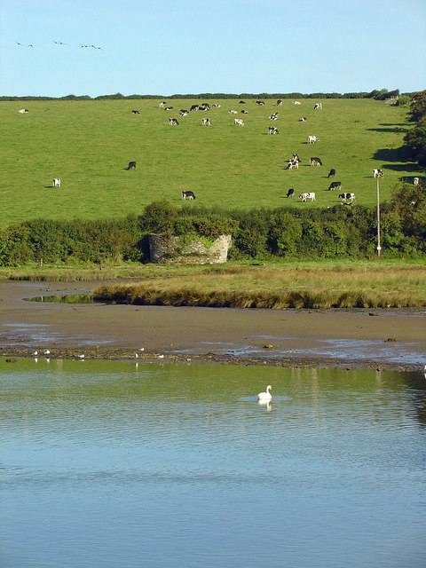 River, swan, kiln, cows, birds: Newport