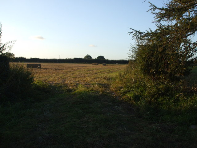 Field on Hotham Hill
