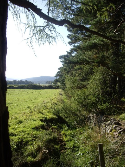 Back of Finzean Community Woods