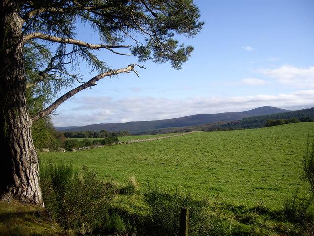 A field behind Finzean Community Woods
