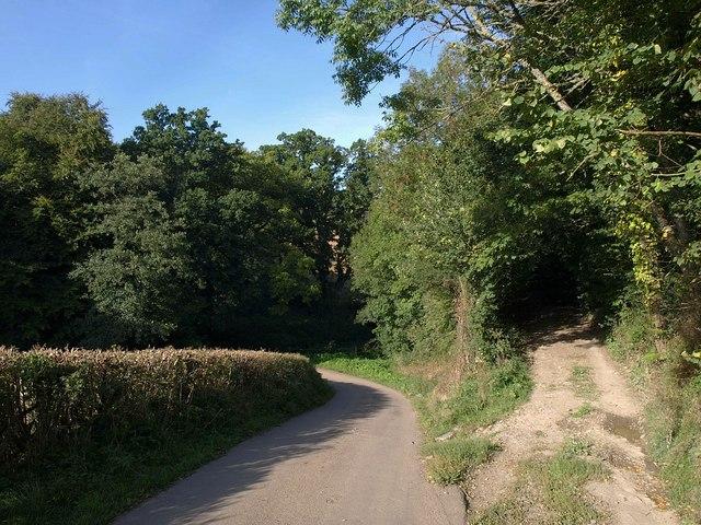 Lane at Higher Brook