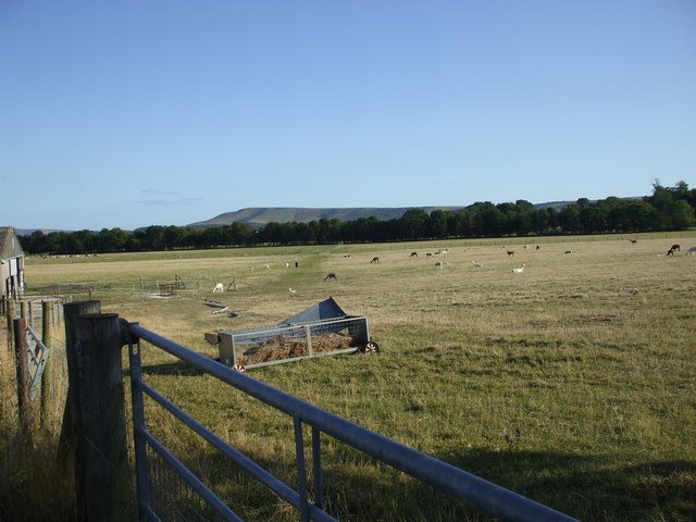 Field of alpacas, Glynde, East Sussex