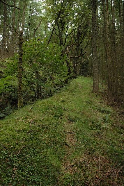 Footpath through forestry