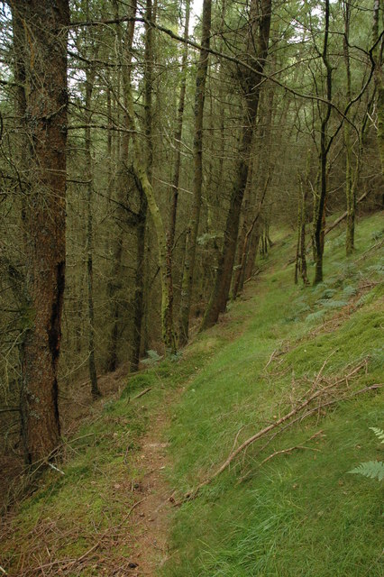 Footpath through forest below Brithdir Coch