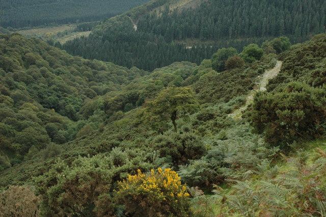 Wooded valley below Tal y Mieryn
