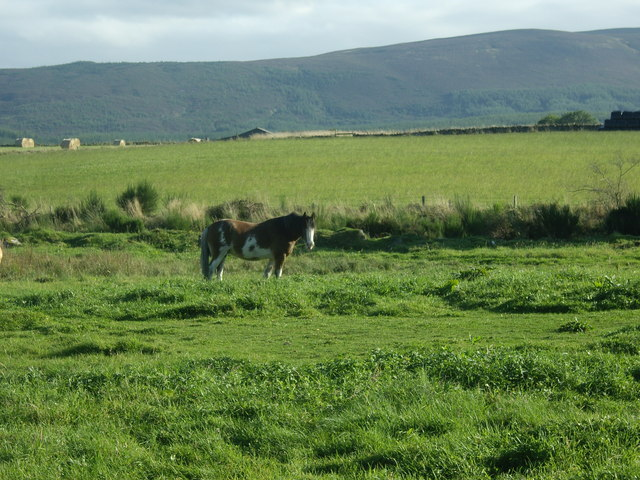 Horse in a water meadow