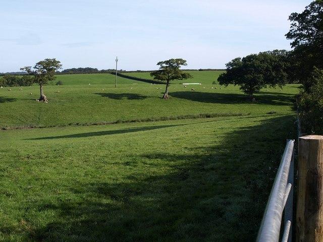 Meadow  near Hackworthy