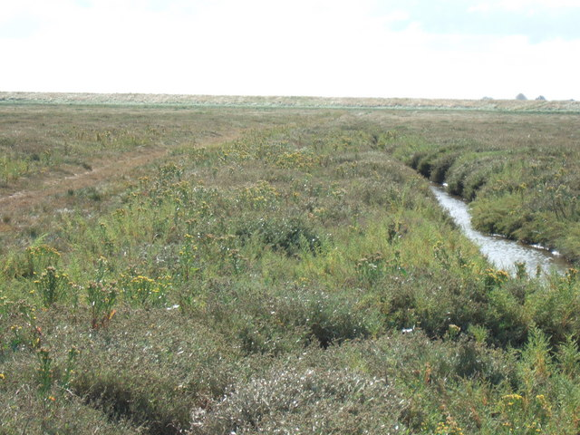 Marsh vegetation on The Breast Sand, The Wash