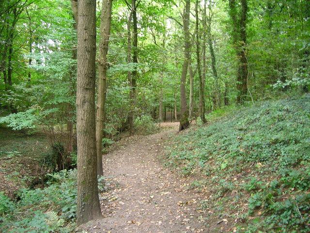 Woodland path in 'Fairy Glen'