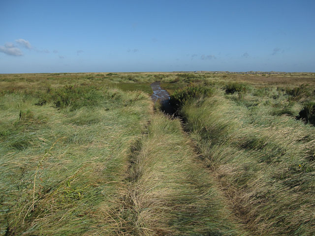 Byway into the marsh
