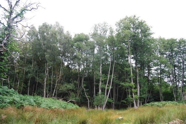 Woodland , Eridge Old Park