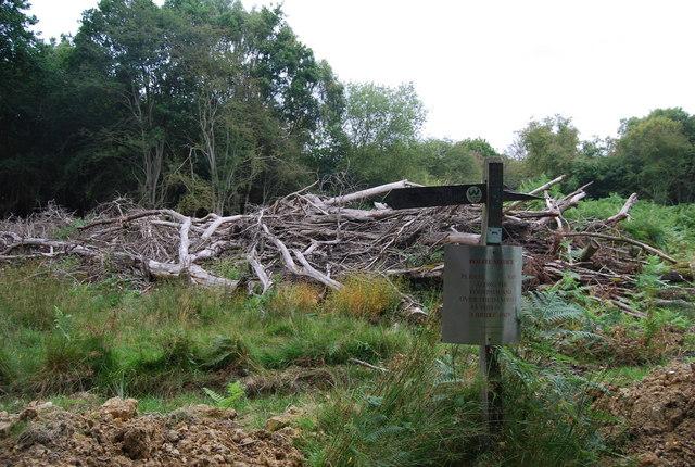 Fallen trees & waymarker, Eridge Park