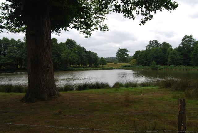 Tree by a small lake, Eridge Park