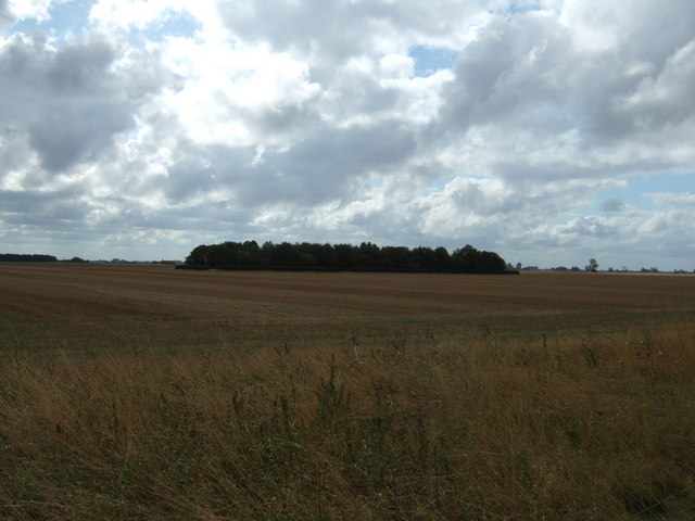 Copse in a stubble field near Terrington St Clement