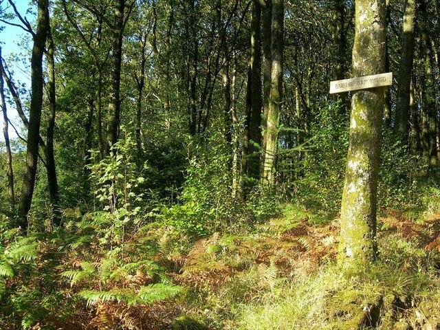 In Burnie Oak Wood