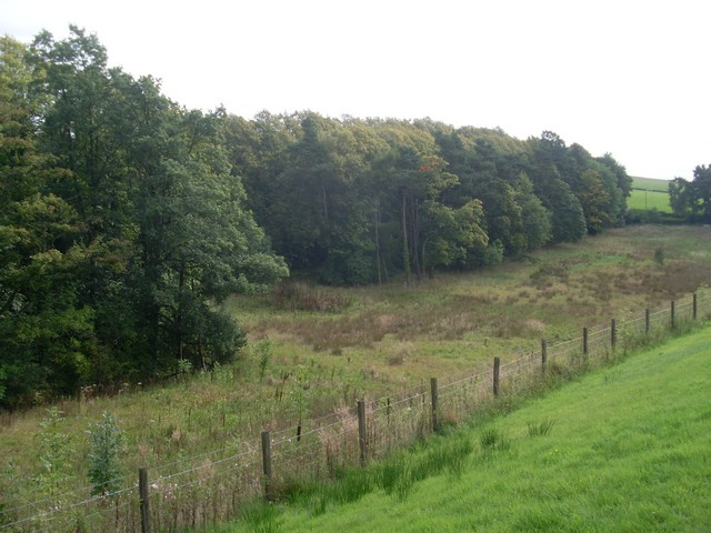 Woodland by the Carmunnock Bypass