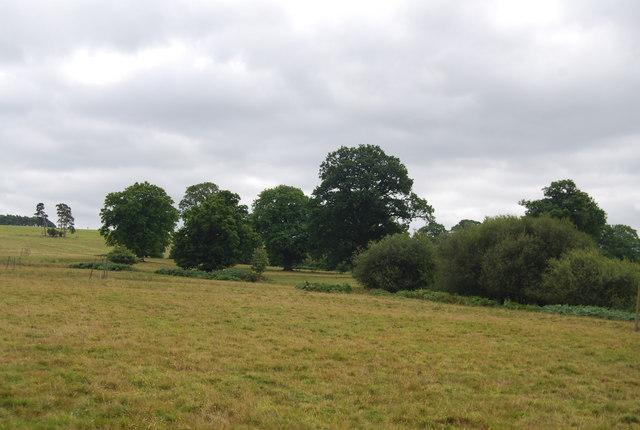Trees south of Tunbridge Wells Circular Path, Eridge Park