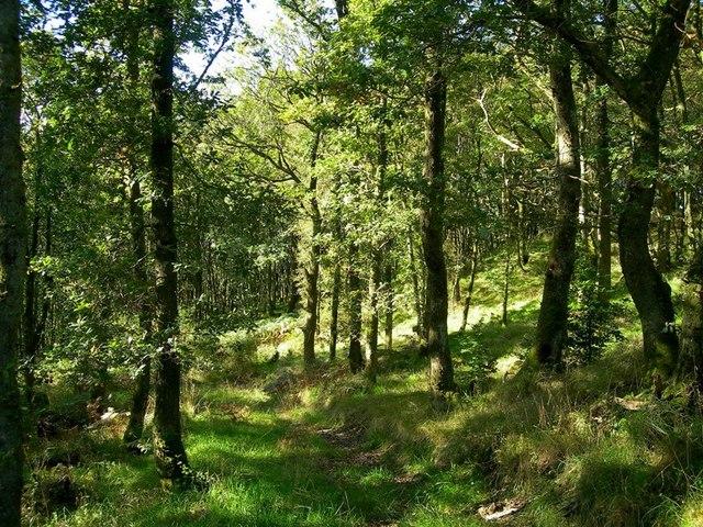 Oakwoods In The Stinchar Valley