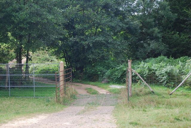 Cattle grid on the Tunbridge Wells Circular Path