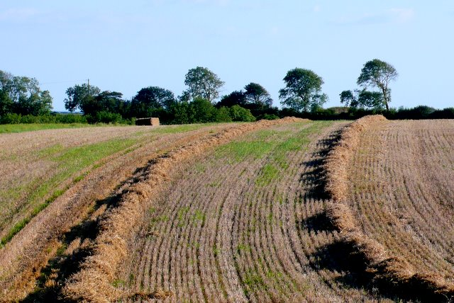 Straw stubble field, Cerne Park