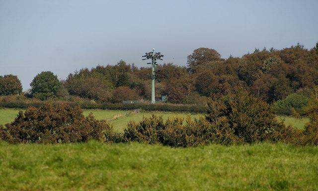 Moss Hill Wood