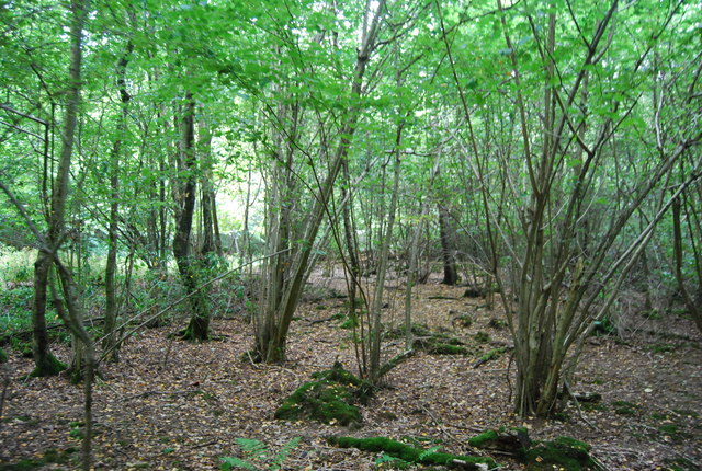 Coppiced trees, Forge Wood