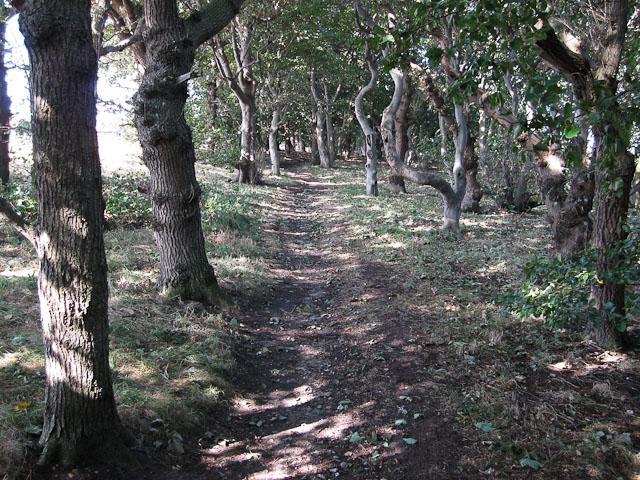Stiffkey Wood (Coneyford Plantation)