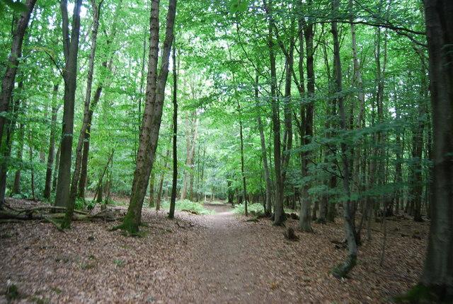 Tunbridge Wells Circular Path - Forge Wood