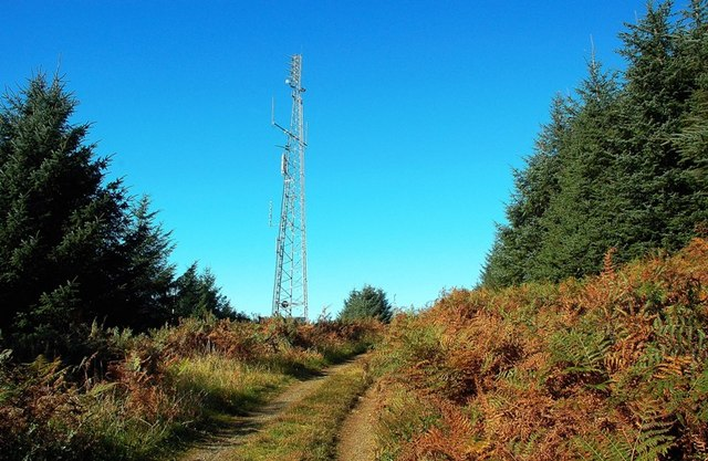 Communications Mast In Almont Forest