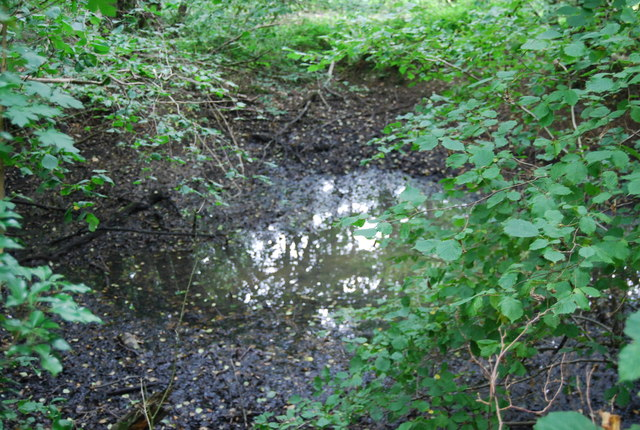 Small marshy pond, Forge Wood