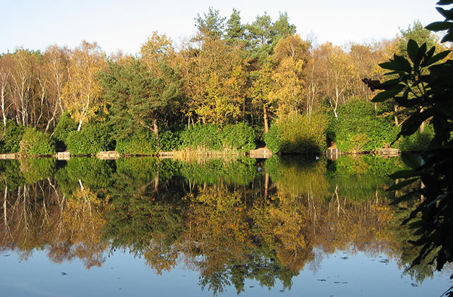 Hammond's Pond, Lightwater Country Park