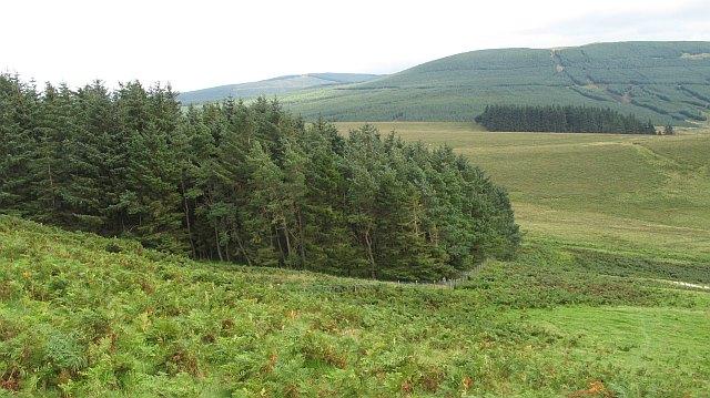 Plantation on Pike Fell