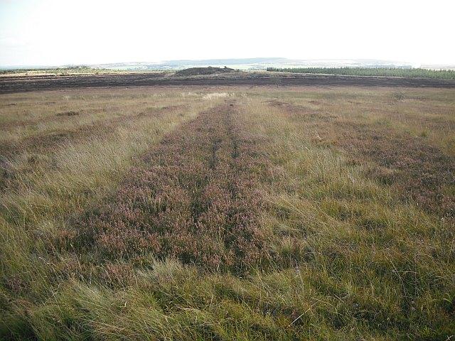 Old peat workings