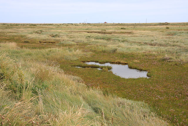 Sliver of saltmarsh