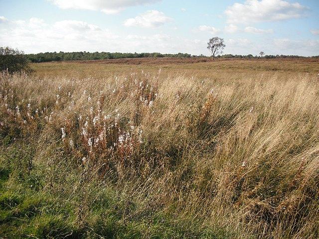 Bogs, Easterton