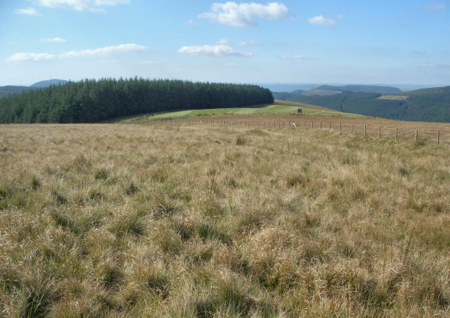 The upper slopes of Foel Trawsnant descending towards forestry and farmland