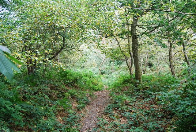 Tunbridge Wells Circular Path through the woods near Eridge Rocks