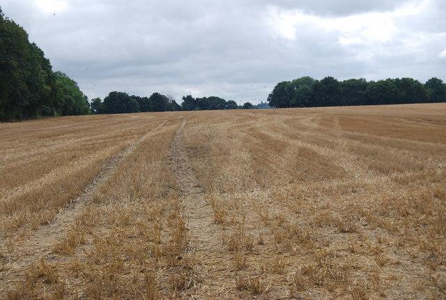 Tunbridge Wells Circular Path crosses a field of stubble, Warren Farm