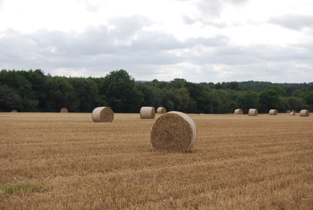 Hay bales by the Tunbridge Wells Circular Path
